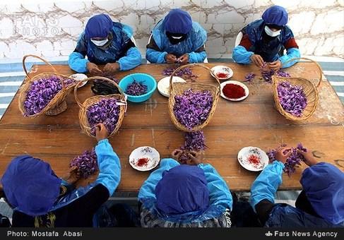 Photo of گزارش الجزیره از تاب آوری صنعت زعفران ایران در برابر تحریم ها