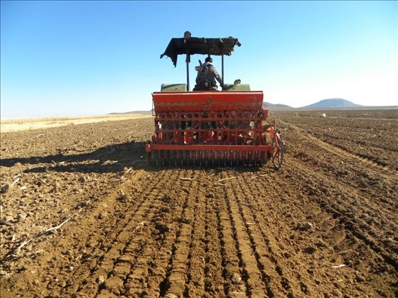 Photo of نتایج یک تحقیق نشان داد؛ درآمد 42 برابری زعفران نسبت به گندم به ازا ی هر هکتار زمین
