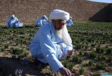 Photo of Afghan saffron father dies; The President of Afghanistan sent a message of condolence